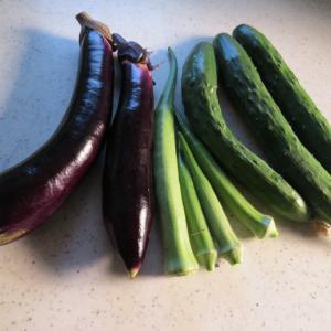 収穫はまだ夏野菜&大根の種まき