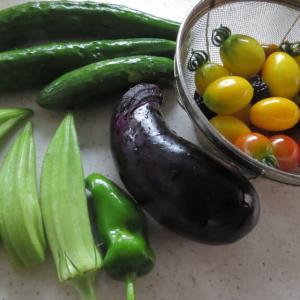 最近の収穫夏野菜
