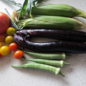 昨日今日の収穫&3期目のきゅうり苗