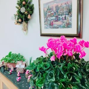 お友達のお家クリスマス&ベランダ