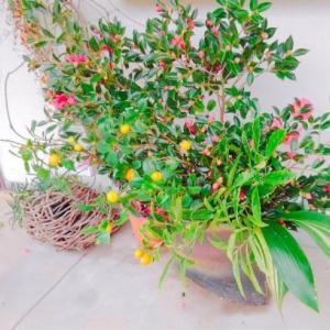 母の玄関のお花