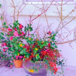母の玄関のお花&初詣