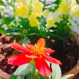 新しく来たお花たち