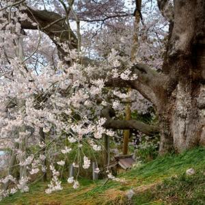 「一雨しめり春の草」