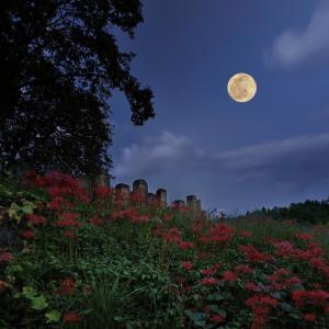「Harvest Moon」