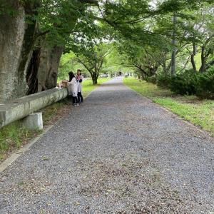 2020年 夏至 金村別雷神社
