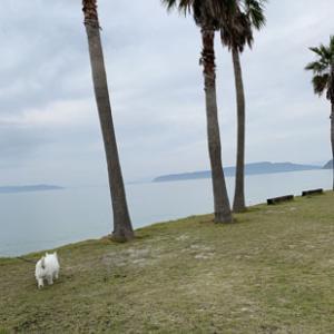 白犬さんと糸島食堂