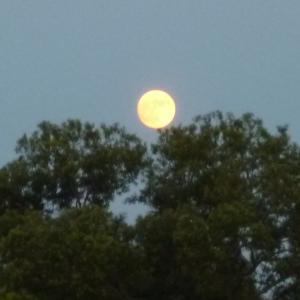満月を見ながらのウォーキング