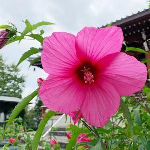 今日は、川越神社ツアー御礼参り。自転車でね。