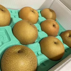 塩漬け銘柄から、優待の梨。甘くて大きくておいしい。