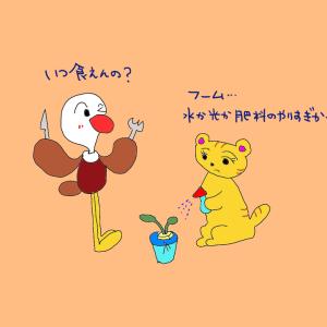お部屋で水耕栽培①~トライ&エラーの繰り返し!