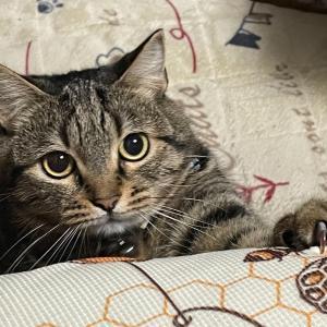 瞳孔が開いた猫。。。(^O^)/