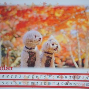 11月の親子さんカレンダー(^^♪