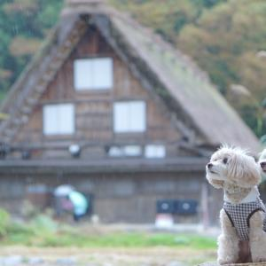 ワンコと白川郷と飛騨高山(^^♪