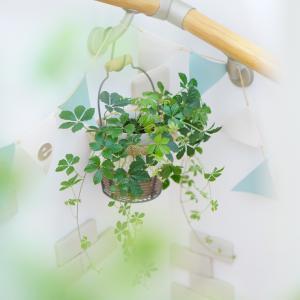 観葉植物にハマる(^^♪