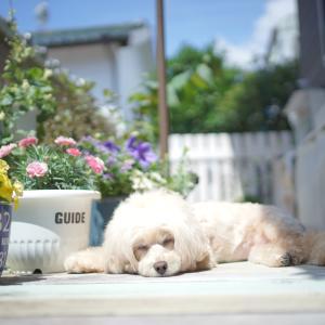 犬の日光浴(^^♪