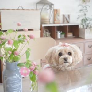 愛犬とお花のコーデ(^^♪
