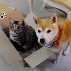 犬・猫・人間、一生のお付き合い☆