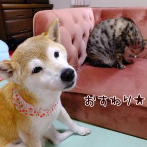 スーパーあんよ&美少女犬猫との暮らし
