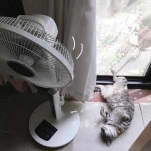 暑い!&キャリーバッグときらら☆