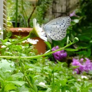 ブラッシングですっきり&蝶ときらら♪
