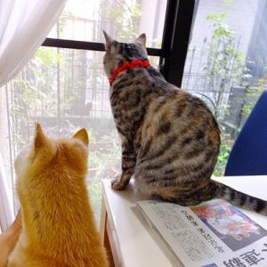 窓辺で並んで♪