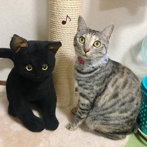 黒猫さんと☆