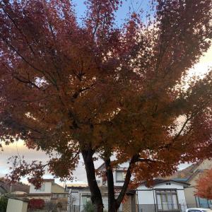 盛岡生活。(2019.11.19)深まる秋と冬支度