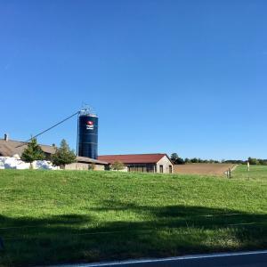 スイスの牛の「尊厳」は角にあり?