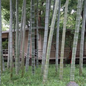 Tokutomi Roka 蘆花公園に行ってきました。実篤公園と何かとくらべてしまった、、