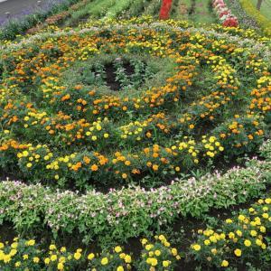 Roka Koen 蘆花公園、芦花公園、蘆花恒春園、、ぜんぶ同じもの。花壇がきれい