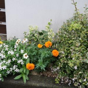 Strolling around 散歩すると花が多い。日本だなあ、、と思う。