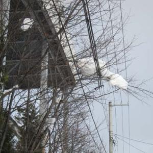 雪の重みで垂れ下がったな~~~!