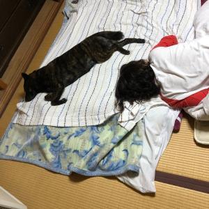 戦士たちの夜〜甲斐犬サンの場合〜_:(´ཀ`」 ∠):グハァッ……