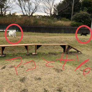 甲斐犬サンのゴボウのシッポ、終了か⁈_:(´ཀ`」 ∠):ハグゥ……⤵︎