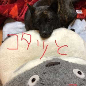 好きなモノに囲まれる、の巻〜スキスキビーム!!(ノ*´з`)ノ・‥…━━━★