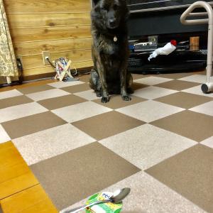 甲斐犬サンの「来る〜、きっと来る〜♬」(*´Д`)θ~♪ラララー