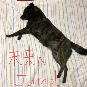 甲斐犬サンの壁画シリーズ〜「飛翔編」─=≡Σ((( つ•̀ω•́)つ