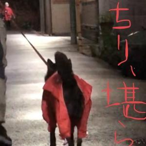 甲斐犬サンの「ウチのコ可愛い選手権」〜其の弐ヾ(*´∀`*)ノキャッキャ‼︎
