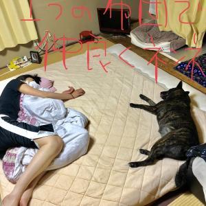 甲斐犬サンのツンデレ度〜スキでキライで嫌いで好きで(*`Λ´*)」ベ、ベツニスキッテワケジャ…