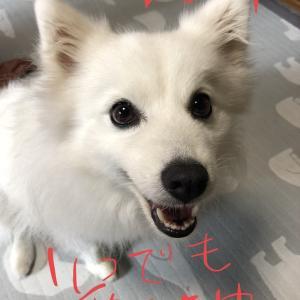 Happy Birthday MACO❤︎〜一昨日のマコべぇへ〜((((((/´З`)/チュチュチュゥウウウウ!!