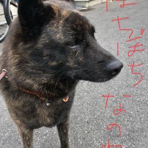 甲斐犬サンの2020年7月の総括!の巻〜୧(๑❛ั⌔❛ั๑)୨ ॢガンバルゾゥッ