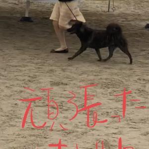 2020年大阪西クラブ連合展 サン♣️〜気持チハ武田ノ風林火山ダゾッε=ε=ε=┏(゚ロ゚;)┛ダダダッ!!