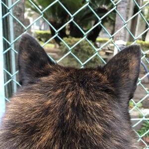 甲斐犬サンの「世界の犬窓から」の巻〜夢ニ向カッテ走ル犬列車カラ〜|ョ・ω・`)チロッ……