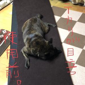 甲斐犬サンの「使用前・中・後」の巻〜イッショニハイロウ||風呂||´0`)=O(*´▽`)/イヤン♪