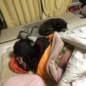 甲斐犬サンの『まちがいさがし』〜菅田将暉サンジャナクテ¿(・・?)ハテ¿
