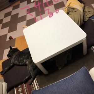 甲斐犬、ネェネと休むの巻〜(*-μ-`*).゚。. ウトウト。