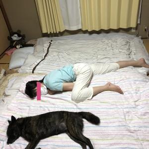 甲斐犬、イヌリンピックに参加するの巻〜~~~(´∀`ノ⌒☆~33~~シャババ