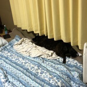 甲斐犬、忍犬修行をするの巻〜ドロン!! |ω・) |・) |) ※パッ ドロン‼︎