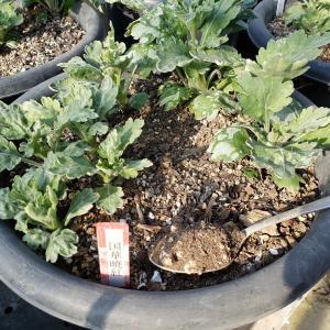 冬期も乾肥を月1回